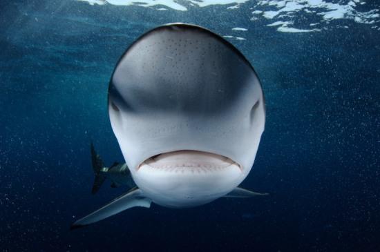 049arabian-shark-fins-tradec2a9thomas-p-peschak